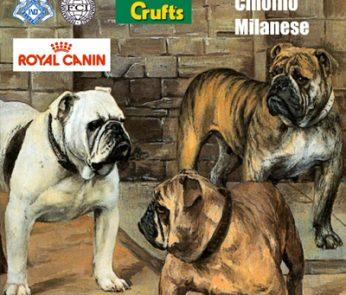 Esposizione canina Milano 2013