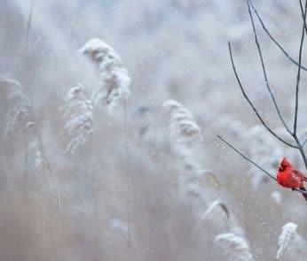 Neve-inverno-freddo