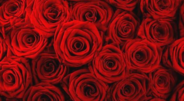 milanesiana 2014 rose