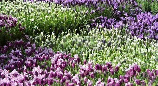 fiori-naviglio-grande-fiori-e-sapori