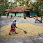 India-McCurry-3
