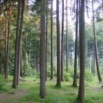 BB bosco abeti (2)