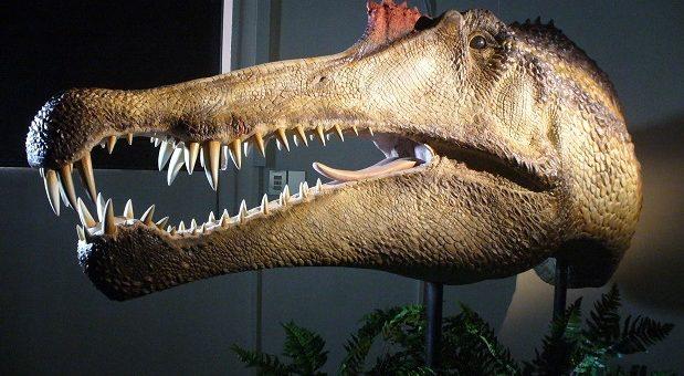 Spinosaurus-evento-MSNM-foto--Maganuco-3-cut