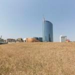 wheatfield-milano