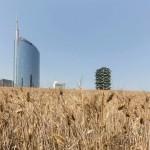 wheatfield-milano-2