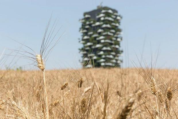 wheatfield-milano-4