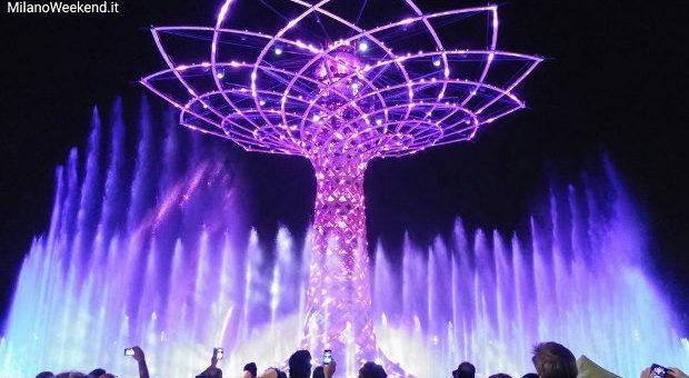 albero vita sera gente (620x349)