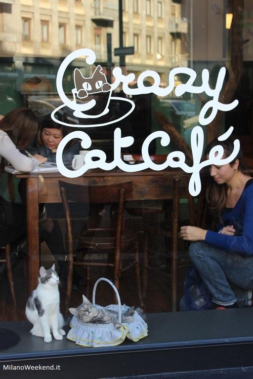 Crazy Cat Cafè Vetrina