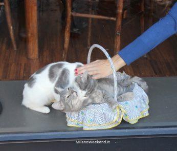 Crazy Cat Cafè ospiti
