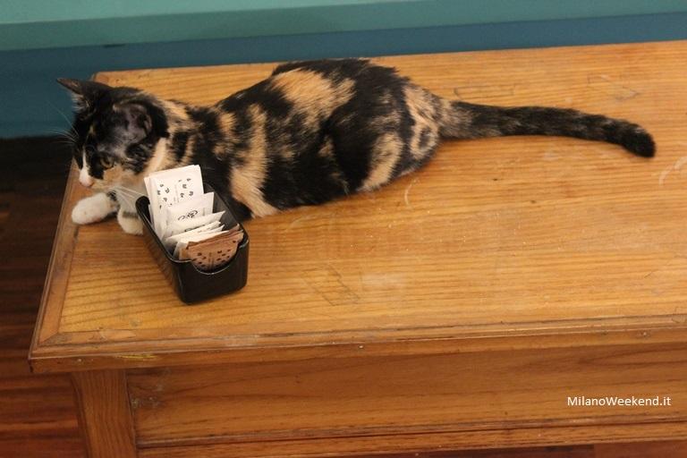 Crazy Cat Cafè gatto