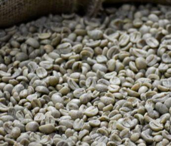 caffè chicchi torrefazione