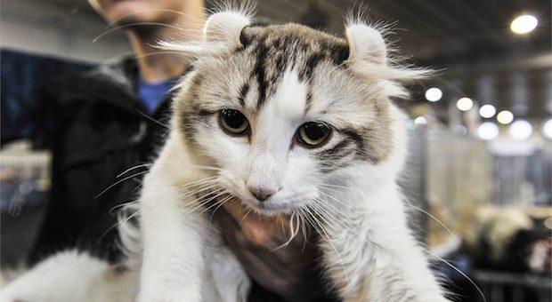 festa-del-gatto-molano
