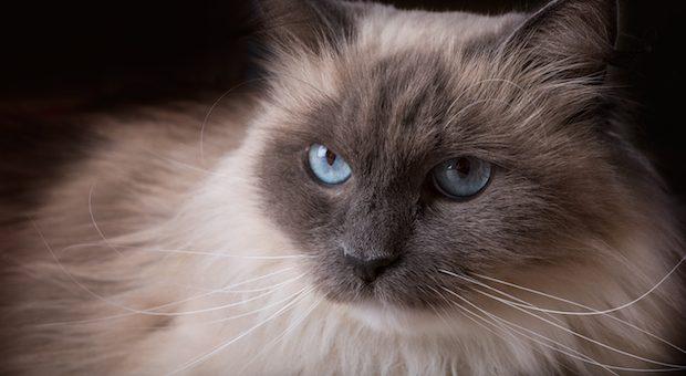 gatti-piu-belli