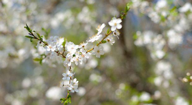 primavera-milano