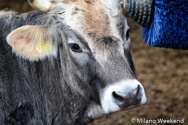 Merano maso animali 2