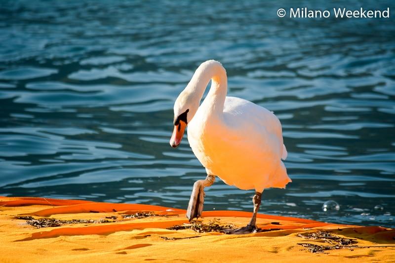 Floating Piers alba Milano Weekend-12
