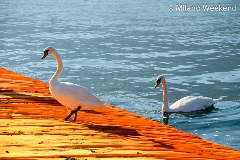 Floating Piers alba Milano Weekend-14
