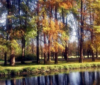 Parco Lambro Alessia Taschieri