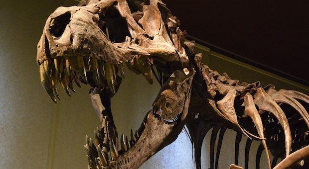dinosauri-al-mudec-di-milano