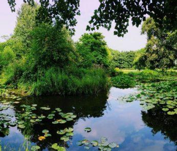 Orto Botanico città studi milano