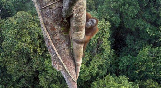 Wildlife Photographer of the Year Fondazione Luciana Matalon Milano
