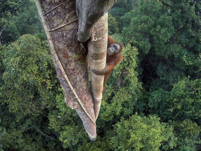Wildlife Photographer of the Year Fondazione Luciana Matalon Milano