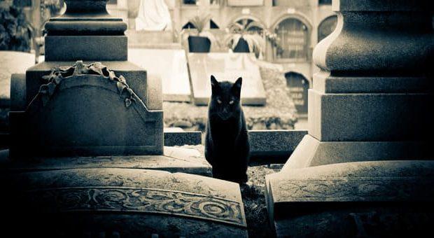 La città dei gatti mostra Wow