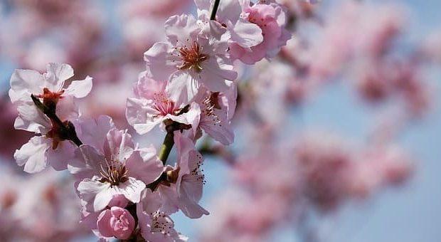 Festa di Primavera alla Cascina CUccagna