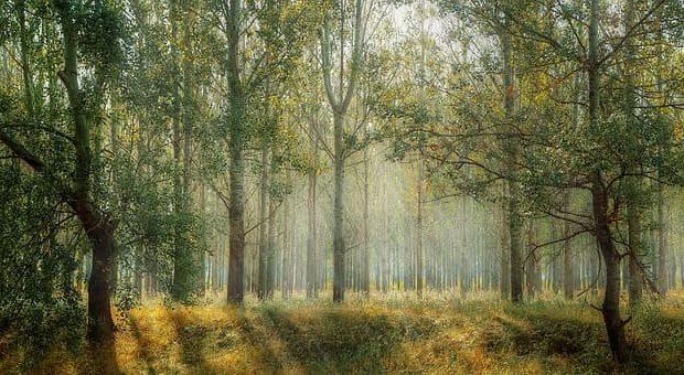 Art oasis secret garden alla sede del WWF