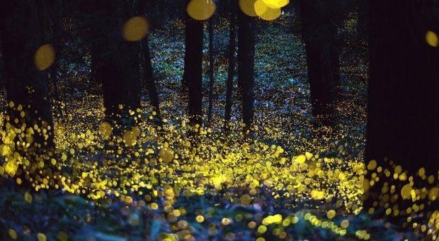 lucciole oasi vanzago