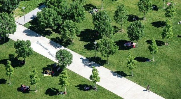 festa fine estate biblioteca alberi