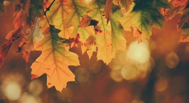foglie-autunno-foliage