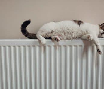 calorifero-gatto-calore