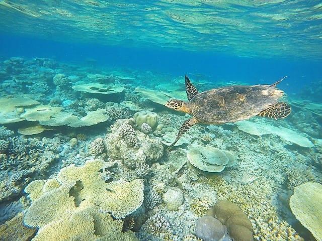 maldive-tartaruga-coralli-min