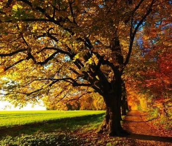 autunno-parco-sentiero-min